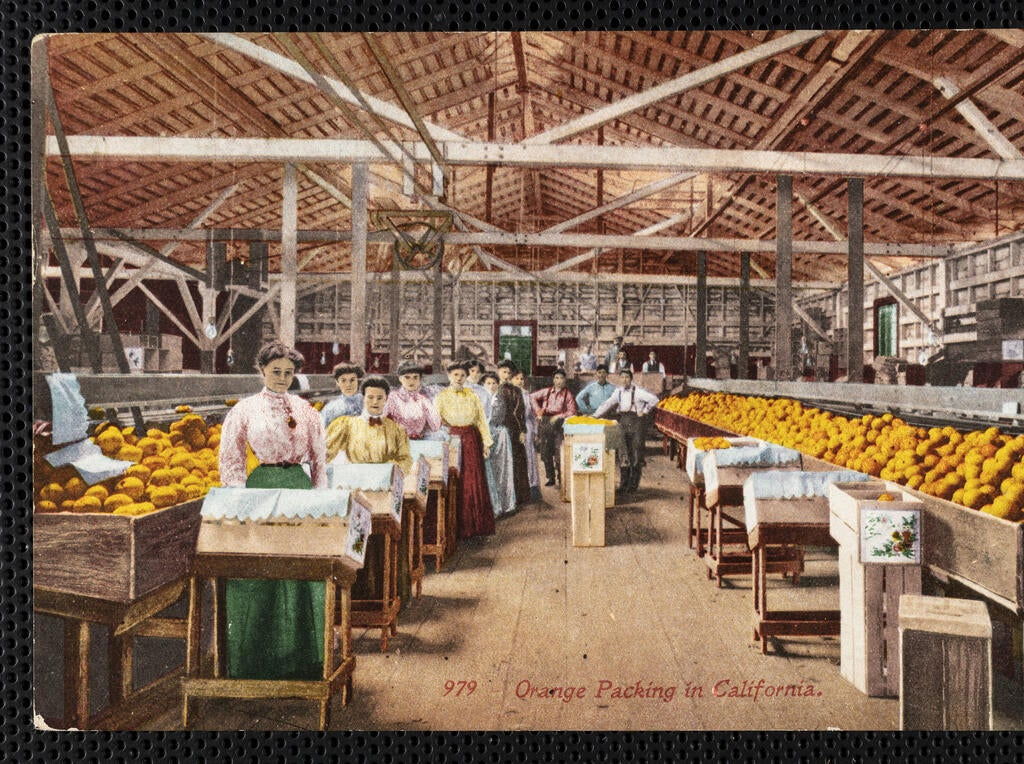 """Orange packing in California"", postcard, 1913-07-10, courtesy of the Workman and Temple Family Homestead Museum, City of Industry, California"
